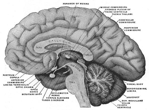 Šišinka mozková