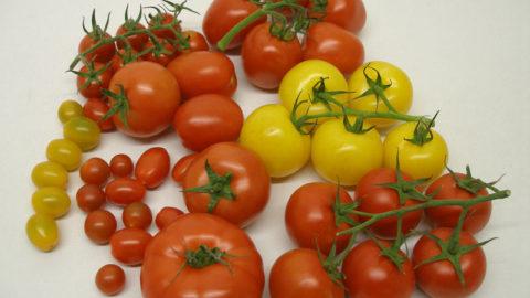 Rajčata – poklad vkuchyni