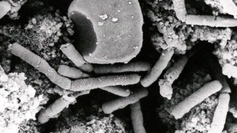 Mikrobiom: Bakteriální orgán ovlivňuje funkce celého těla