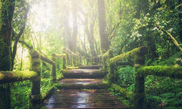 krajina lesy forest