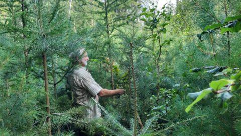 Posázaví: Jak se sází pestrý les (fotogalerie)