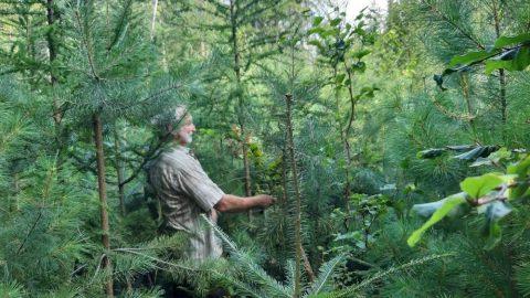 Rozhovory olese nejen slesníky: Pestrý les vPosázaví nebo monokultury? (4.díl)