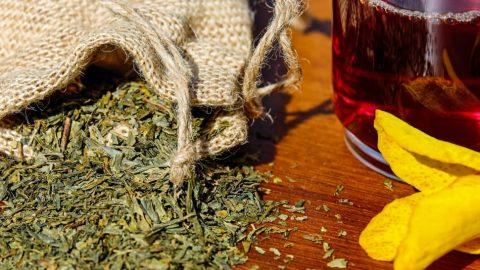 Liečivé rastliny – úvod