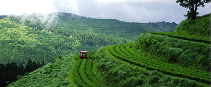 čajová zahrada