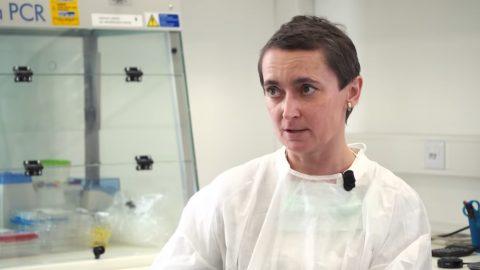 Viroložka Peková: Koronavirus mohl vzniknout laboratorní cestou aomylem uniknout