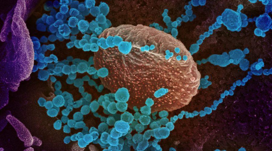 koronavirus mikroskop