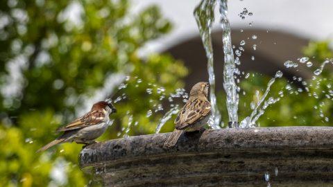 Společné jarní vítání ptactva zrušeno, do přírody za ptáky můžeme vyjít vrouškách