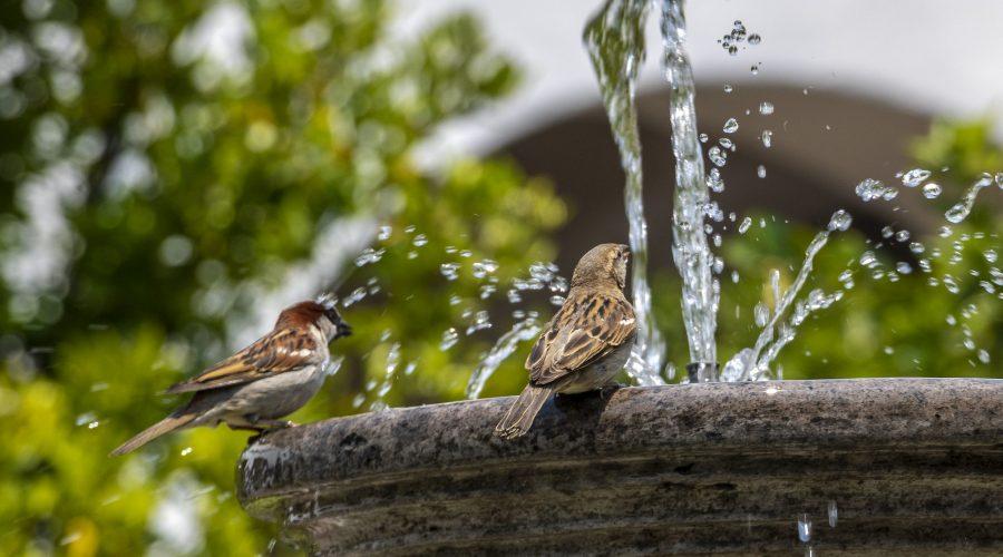 Ptaci Pitko