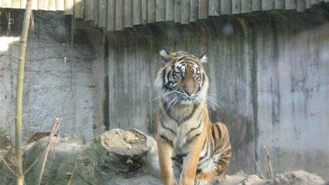 Zoologické zahrady žádají vládu obližší termín otevření venkovních areálů
