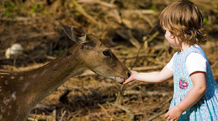 Ztráta spojení s přírodou negativní vliv nejen na děti, ale i na celé lidstvo. (Claus Rebler/ flickr.com)