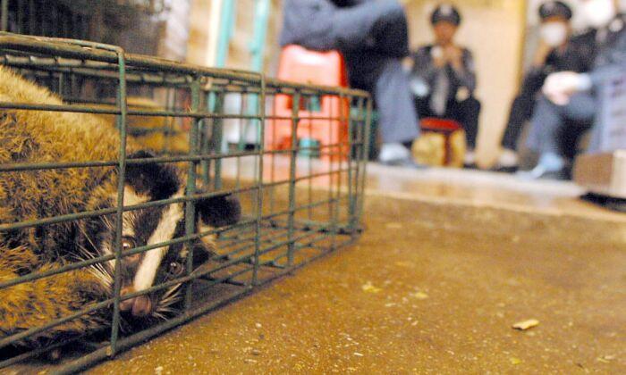Čínští zdravotníci a policisté hlídají kočky, které byly zabaveny na trhu s volně žijícími živočichy v Kuang-čou, provincii Kuang-tung v jižní Číně. Ilustrační foto. (- / AFP prostřednictvím Getty Images)