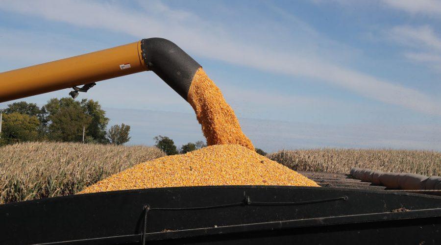 kukuřice usa