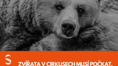 Cirkusy aklecové chovy. Čeští politici nás zklamali, říkají ochránci zvířat