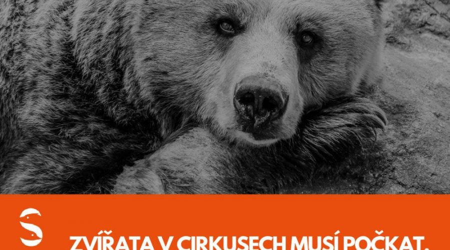 Svoboda zvířat medvěd