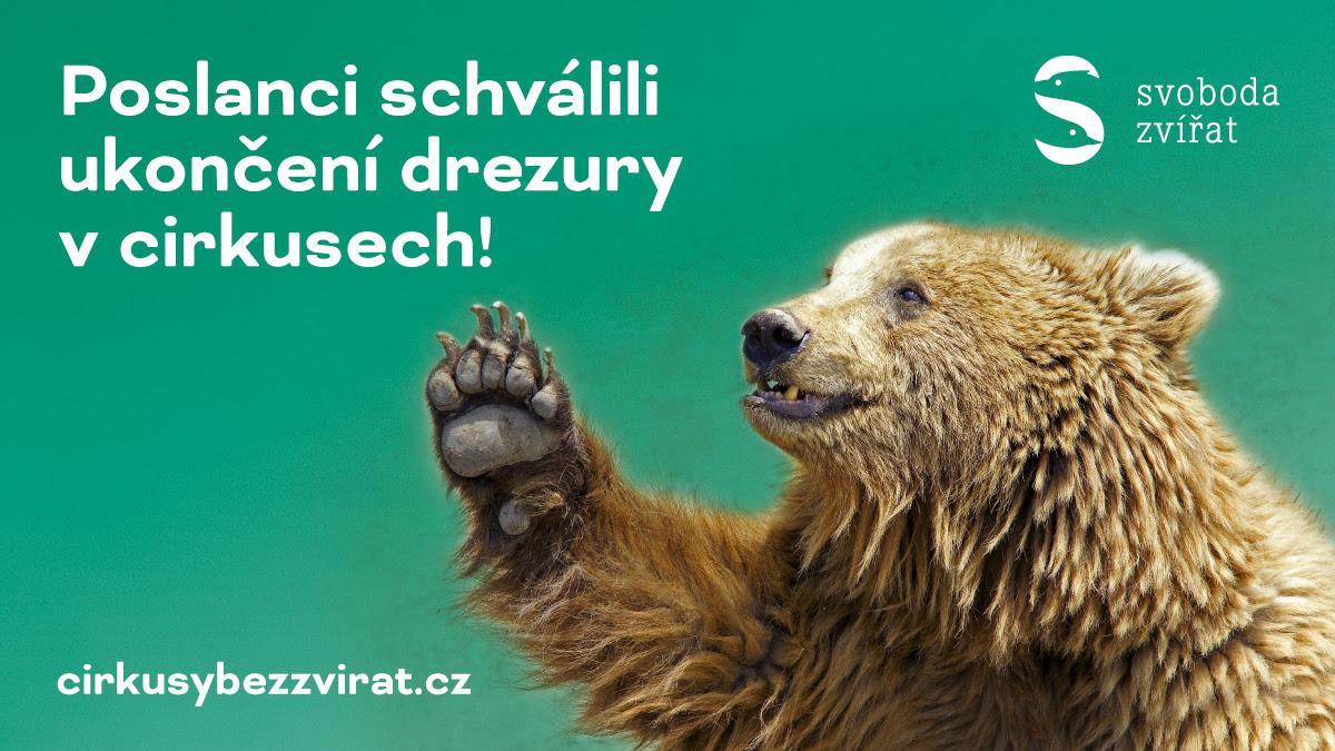 Medvěd. (Svoboda zvířat,  z. s.)