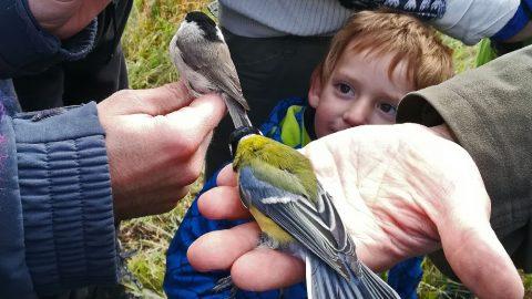 Festival ptactva – ČSO zve na první říjnový víkend