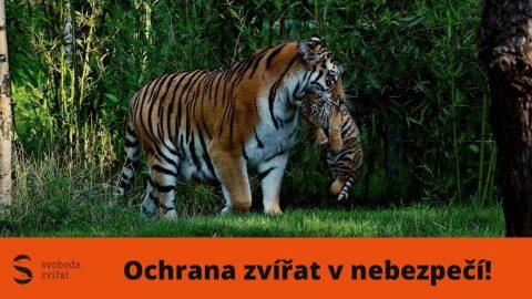 Dvě přední světové organizace informují o rozsáhlém obchodu stygry, ve kterém figuruje Česká republika
