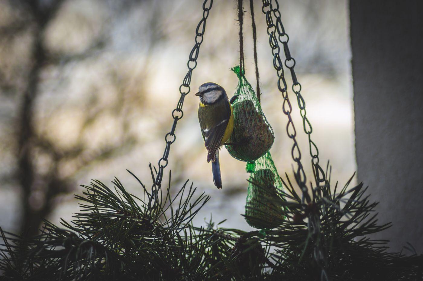 Koule Ptak Sitky Krmeni Zima