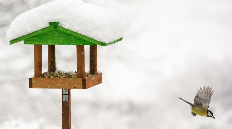 ptaci zima krmeni