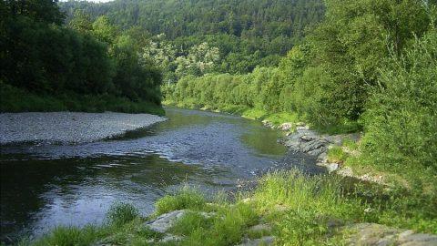 Laboratoř potvrzuje, řeku Bečvu otrávil kyanid.  Pachatel neznámý, zpřísnění legislativy