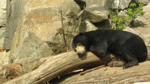 Zoo Jihlava rekapituluje loňský rok