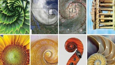Zlatá spirála: Fascinující geometrie přírody