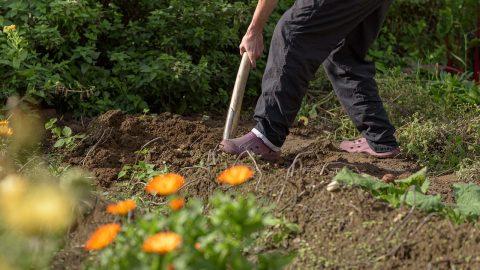 Zahrada jako cesta ze splínu: Zahradničení propojuje spřírodou azlepšuje duševní zdraví