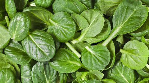 Špenát – zelený poklad znašich zahrad