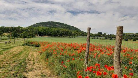 Hora Říp, symbol původu Čechů (tip na výlet)