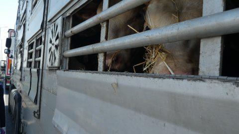 Společnost pro zvířata podává výzvu kzapálení svíček před ministerstvem zemědělství