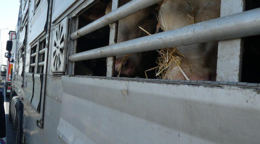 Animal Welfare Foundation Svob. Zvířat