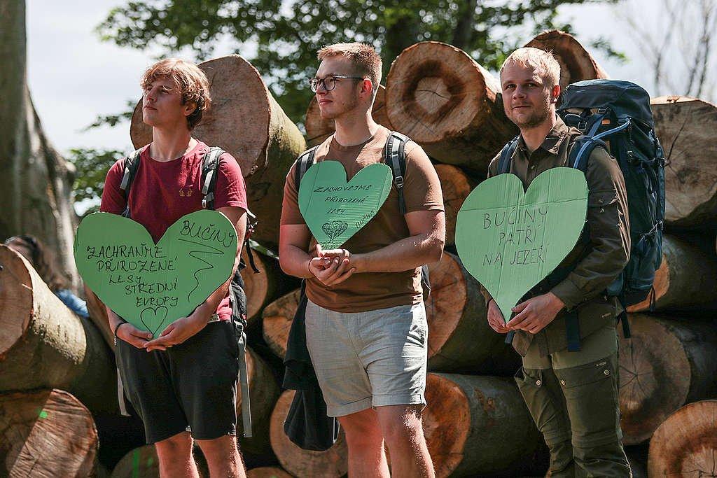 Protest za záchranu bučin u Horního Jiřetína (Greenpeace / Jakub Šedý)