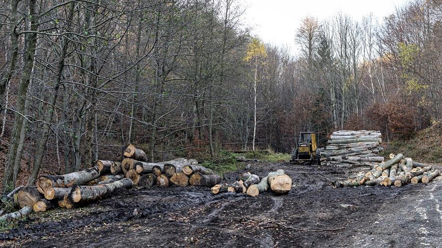Kácení bukových lesů v krušnohoří. (Petr Zewlakk Vrabec / Greenpeace)