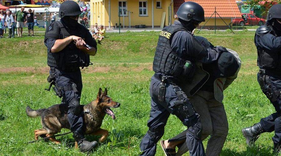 Výcvik policejních psů. Ilustrační foto. (policie.cz)