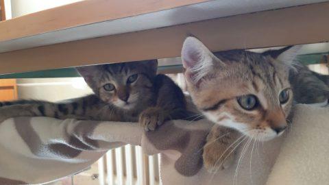 Když si adoptujete dvě koťata zkontejneru