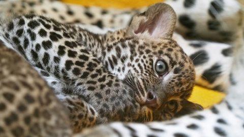 Zoo Jihlava je plná mláďat. Letos měla rekordní počet prázdninových návštěvníků
