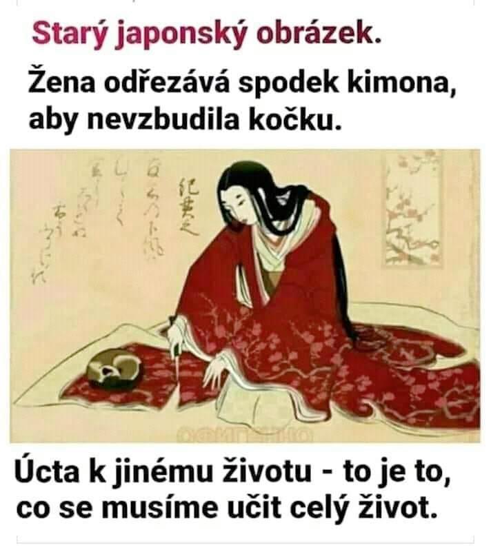 Kimono S Kočkou