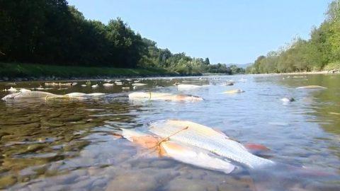 Najde pachatele znečištění Bečvy parlamentní komise? ptá se NFPK