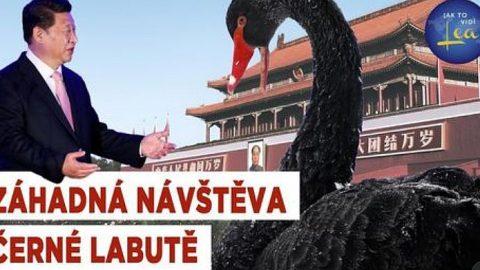Záhadná návštěva černé labutě na náměstí Nebeského klidu vPekingu
